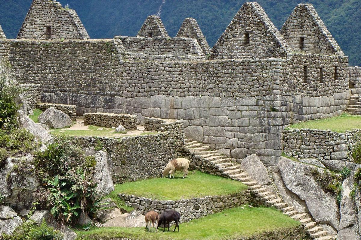 Machu-Picchu_Alpaka